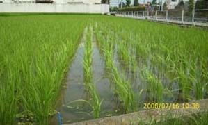 Biomassstraw0501_2